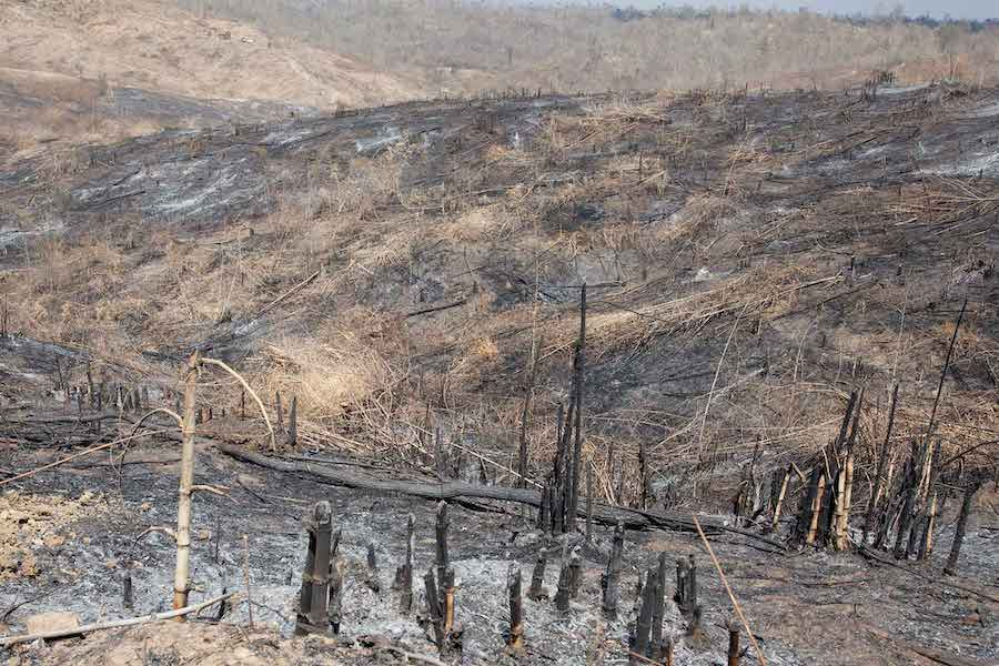 The Price Of Deforestation