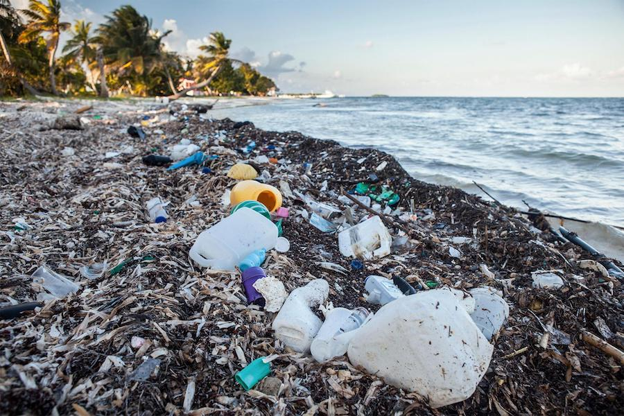 The Message. Marine Litter due to Overpopulation