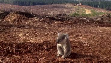 Human Overpopulation Pushing Wildlife To Extinction